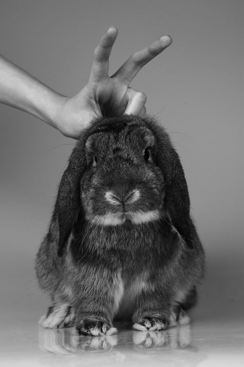 Photo by Sharon McCabe. (good to know you can photobomb a rabbit with rabbit ears ;)