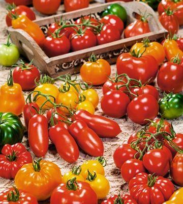 Tomaattilajitelma