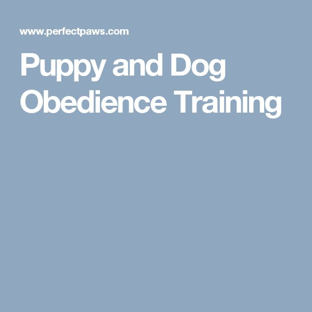Puppy and Dog Obedience Training