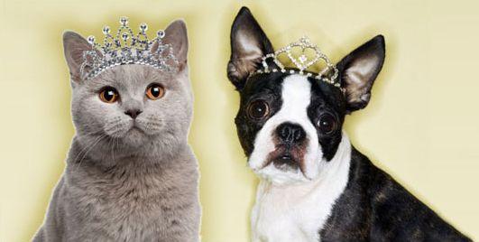 PRIME Pet Insurance Australia
