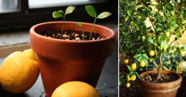 The Best Plants To Grow In Summer Heat Loving Plants 400 x 300