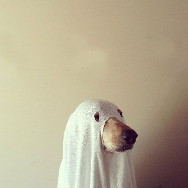 O Halloween está chegando e você já decidiu a fantasia do seu animal de estimação?