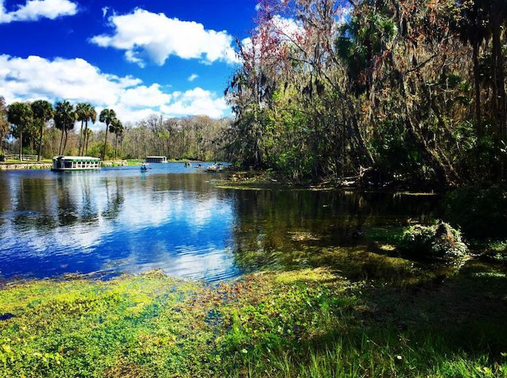 """<h3><a href=""""https://www.floridastateparks.org/park/Silver-Springs/"""">Silver Springs</a></h3> <i>1425 NE 58th Ave, Ocala, FL 34470; 1 hour, 15 minutes from Orlando </i> <br>A ride on one of their glass bottom boats will provide a glimpse at one of the state's largest artesian springs. If you're looking to go swimming, you might want to try visiting somewhere else, but if you're itching to get into a kayak or canoe, add this to your to-visit list.  <br> <br>Photo via _alex_andrine/Instagram"""