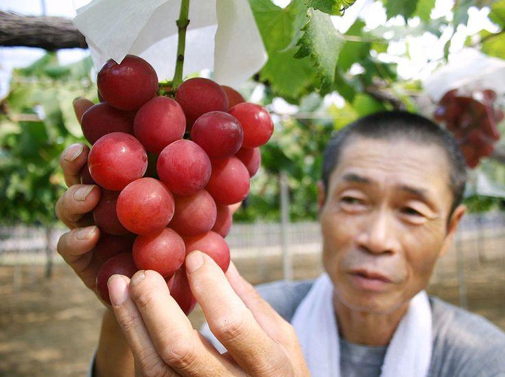 """**Weintraube """"Ruby Roman"""" aus Japan für 4.000€ versteigert** - Bei einer Auktion in Japan wurde der Rekordpreis von 550.000 Yen (ca. 4.000 Euro) für eine Weintraube der Sorte """"Ruby Roman"""" versteigert. Die Traube besteht aus 34 Beeren, dunkelroterFarbe und einem Gewicht von 30g je Beere. Eine einzelne Beere kostet somit117€. Der Zuckergehalt ist... - http://www.myfreshfarm.de/blog/weintraube-ruby-roman-aus-japan-fuer-4-000e-versteigert/??utm_source=PN&utm"""