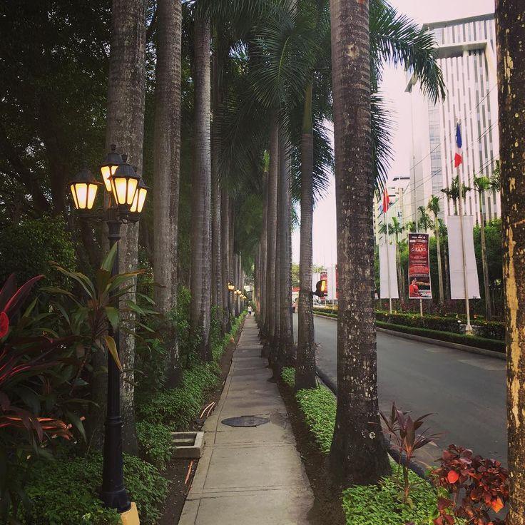 Красивая дорожка среди деревьев.  #филиппины #себу #деревья #путешествие #philippines #cebu #tree #travel #travelling #trip #フィリピン #セブ #旅行 #木