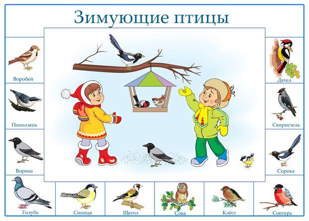 Зимующие птицы. Плакат для дошкольников