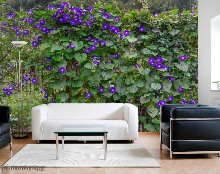 Morning Glories | Buy Prepasted Wallpaper Murals Online - Muralunique.com