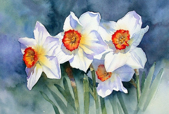 Narcissus in the sun by Ann Mortimer.