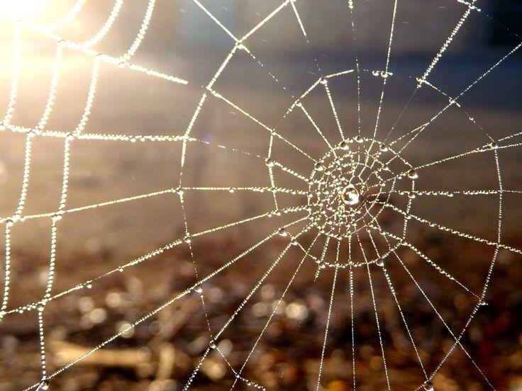 Spider webs sacred geometry pattern