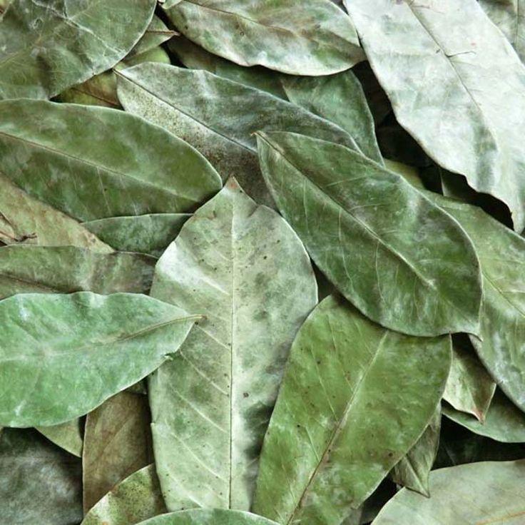 Feuilles de Corossol séchées (Annona muricata)
