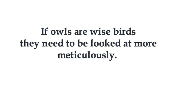 If owls are wise birds