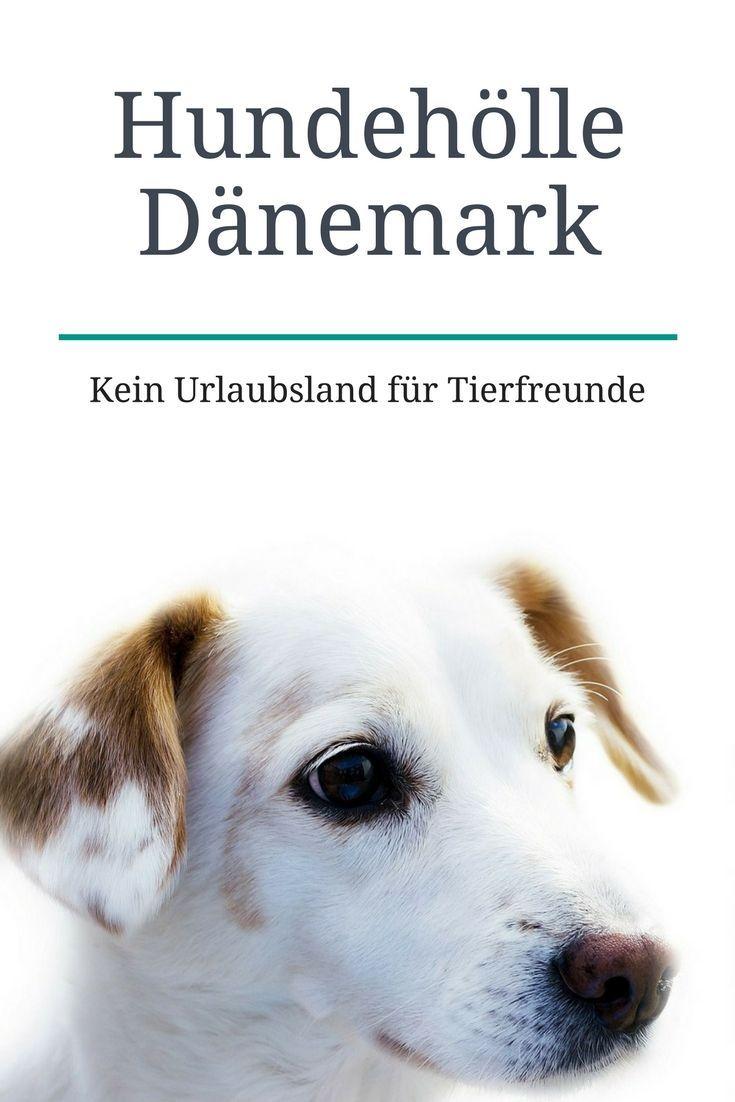 Hundeh�lle D�nemark €� Kein Land F�r Tierfreunde
