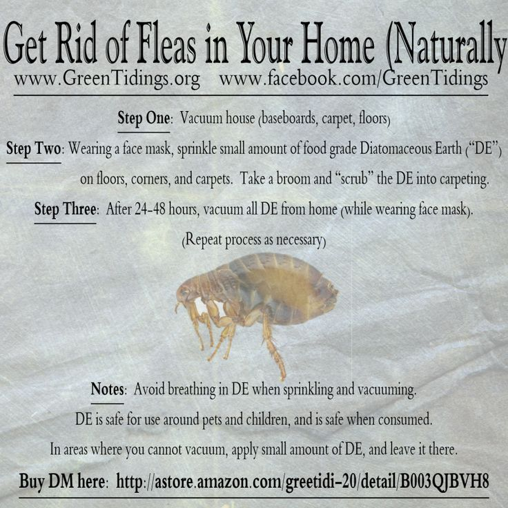 how to get rid of fleas naturally with salt
