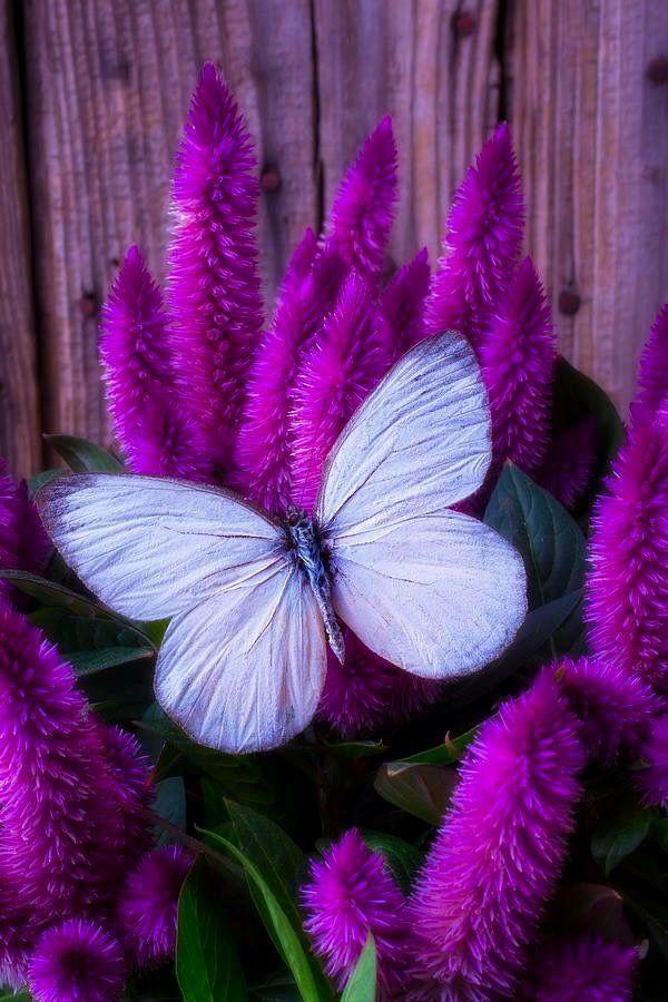 Картинки в сиреневом и фиолетовом цвете, ночной чат