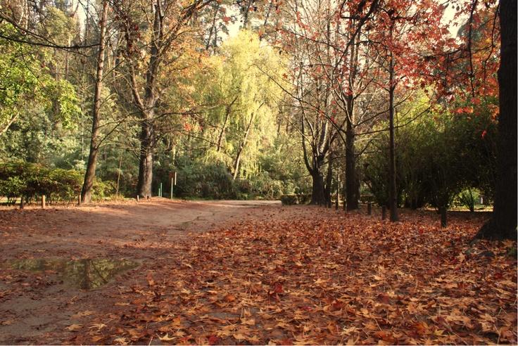 Desde demirar.cl: En honor a las 100 hectáreas quemadas en Jardín Botánico – ciudad de Viña del Mar, Chile. http://www.demirar.cl/2013/01/en-honor-a-las-100-hectareas-quemadas-en-jardin-botanico-ciudad-de-vina-del-mar/