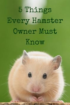 Keep your hamster safe, healthy and happy with these health and wellness tips every hamster owner should know.
