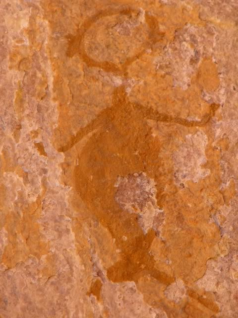 Over 250 million years ago, the Klein Karoo of South Africa was not the desert that it is today, but rather was under the sea.  Receding waters left us with the Cango Caves and the legend of a Mermaid.  San rock paintings located in the driest of Karoo areas depict Mermaid-like creatures.  The San people were known for directly depicting what they saw, not interpretive rituals. The Animal Planet mockumentary on Mermaids based their CGI cave paintings partially on the real San Paintings.
