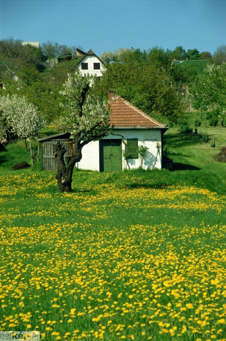 farmhouse, Hungary