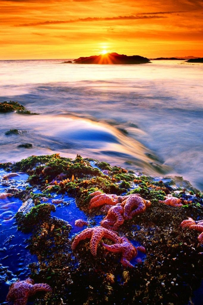 Pacific Rim National Park, Vancouver Island, British Columbia | Nature | Pinterest | Vancouver island, Places and British columbia