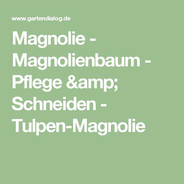 Magnolie - Magnolienbaum - Pflege & Schneiden - Tulpen-Magnolie