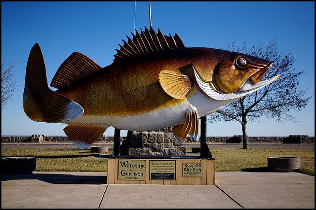 Walleye in Garrison, MN  on Lake Mille Lacs.  This is on the way to Lone Lake