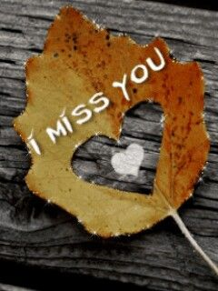 ♡ more than all the leaves in the world, Robbie ~ Remember This!