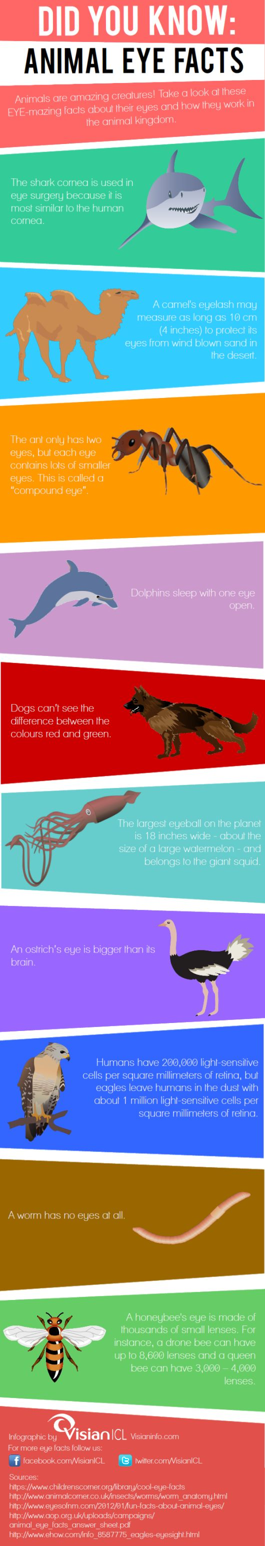 ANIMAL EYES: Take a look at this info-graphic we put together of our top 10 animal EYE facts