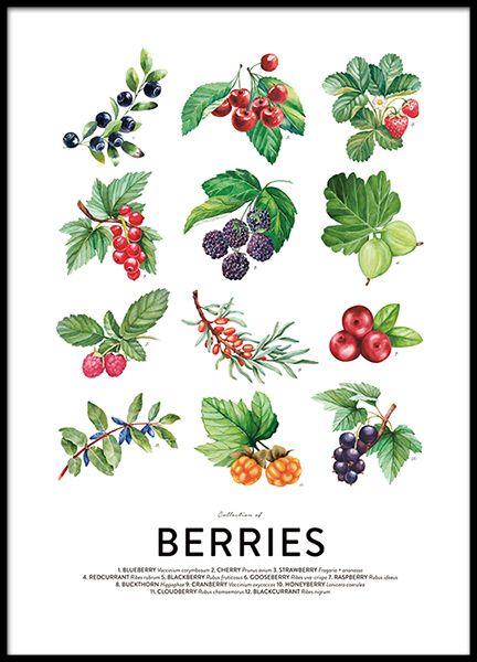 Berries, julisteet ryhmässä Julisteet  / Koot / 50x70 cm @ Desenio AB (8591)