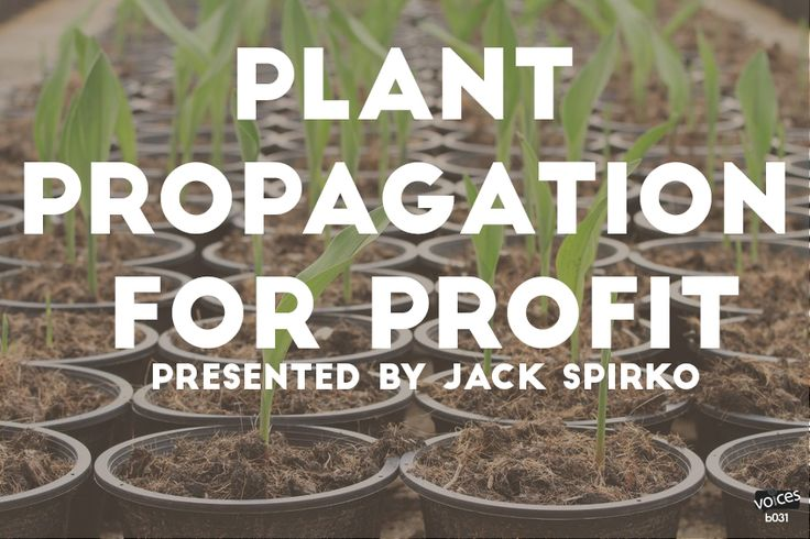 Jack Spirko: Plant Propagation for Profit While the presentation will focus on plant propagation for a profit from a small/backyard nursery stand point if you want a successful permaculture business you will want to attend…