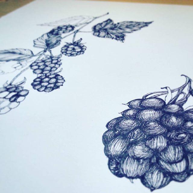 Blackberries Illustration Drawing. #food #berries #nature