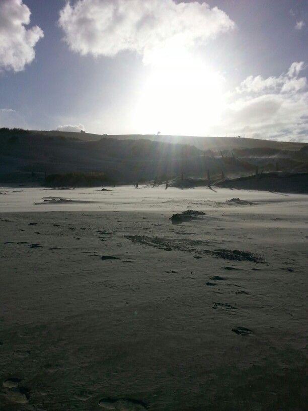 #DunedinSeries wild beaches Dunedin
