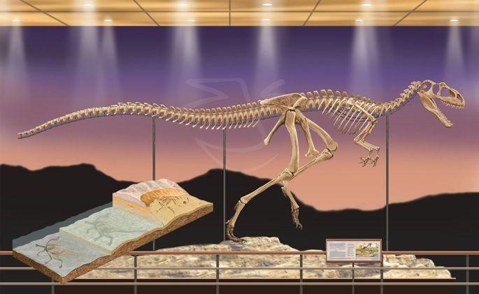 megalosaurus skeleton museum display