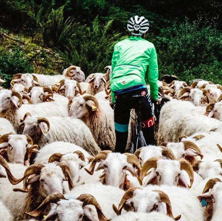 There seems to be a slight obstruction on the road. #cycling #cyclingfest #cyclinglife #cyclo #cycling #cyclist #cyclisme #cycleporn #cyclingfans #cyclingrace #ProCycling #roadcycling #roadbikeaction #bicycle #bicycles #bikelife #bikeporn #bicicleta #instabike #fietsen #wielrennen #peloton #bici #cycle