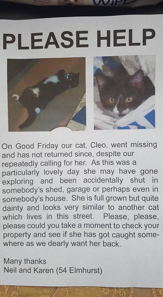 Fareham, Hampshire. Cleo, chipped, missing since Good Friday and so dearly missed!!! Anybody in Fareham around the area near the town and the gillies please check any sheds in case she is stuck. If you spot her please please direct message me we miss her so so much