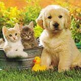 caini pisici