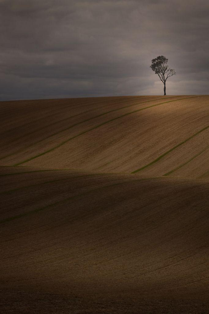 26 best Lone Deciduousness images on Pinterest | Paisajes, Beautiful ...