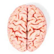 L-Carnitine Brain Health and Fat Loss