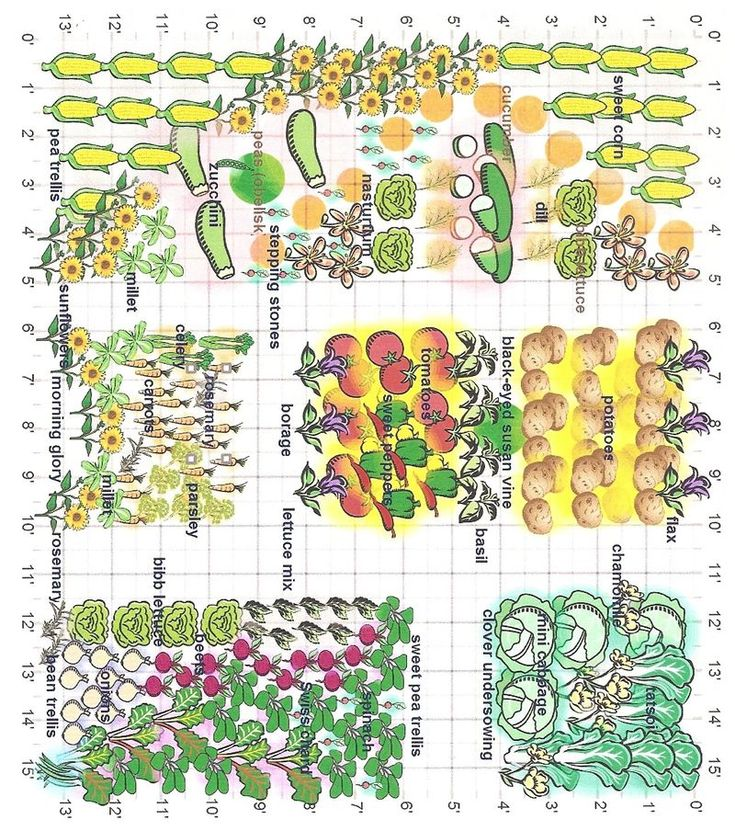 Kitchen Garden Planner: Partner Planting Grid