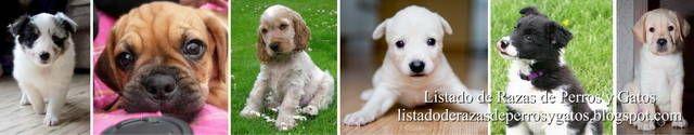 Listado de Razas de Perros y Gatos. Todos los tipos...: Nombre de Perros