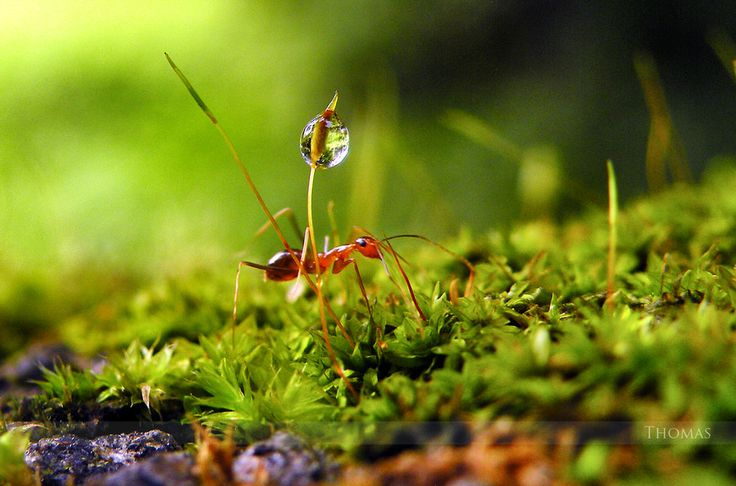 Scurrying away by Thomas Philip on 500px