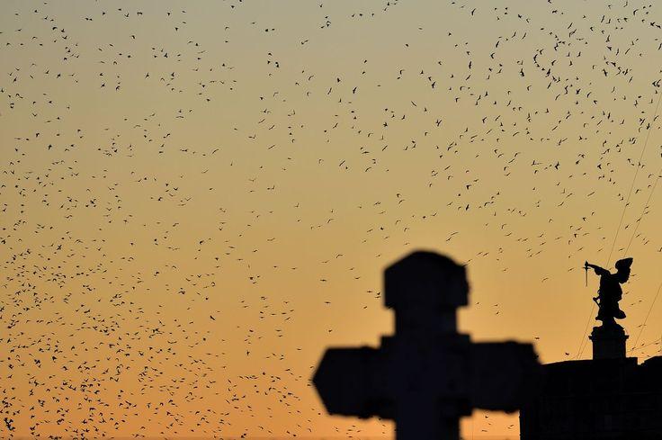 Los pájaros que migran desde el norte de Europa vuelan sobre Roma durante el tiempo de otoño e invierno.
