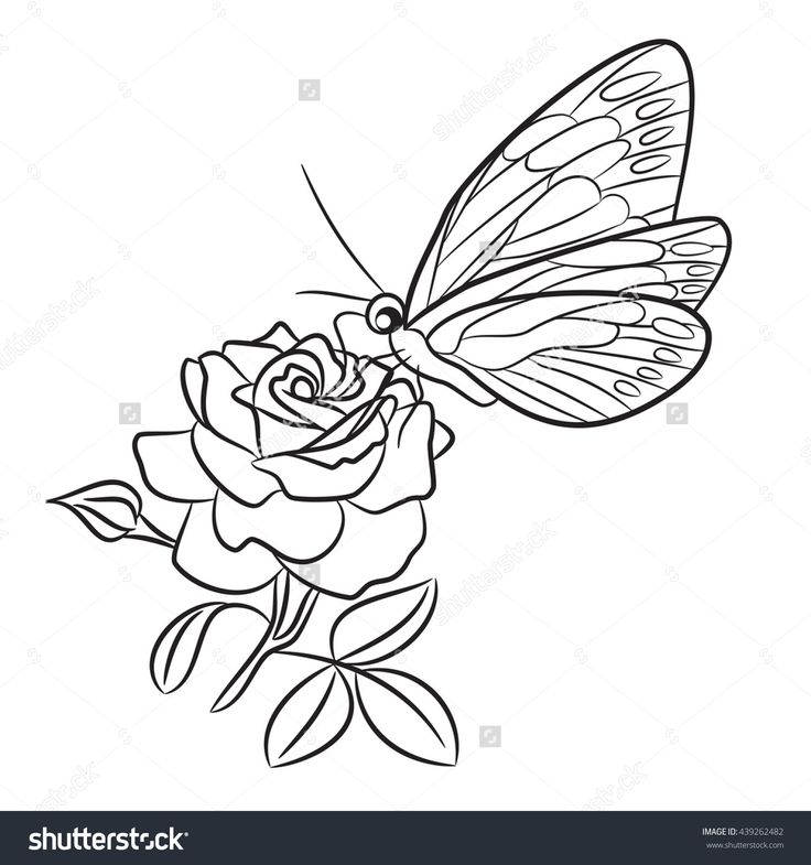 Small Line Drawing Tattoos : The best small butterfly tattoo outline drawing images