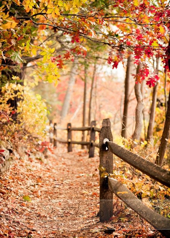 Autumn Path, Fall Colors, Orange, Yellow, Tree Branches, Wooden Fence. MEMBER - Helen M. Photography