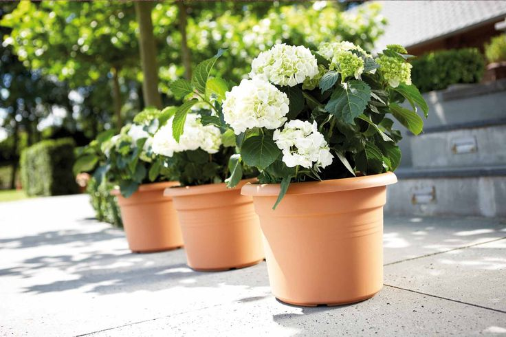 Hornbach gradina: sisteme de autoudare a plantelor