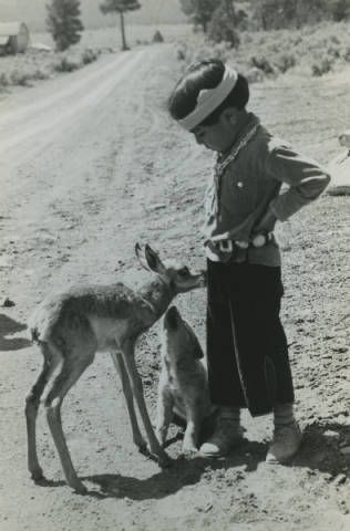 Hopi boy, baby antelope and puppy, Fred Harvey Company Photograph Collection, ca. 1925 Heard Museum, Phoenix, Arizona [RC1:344]