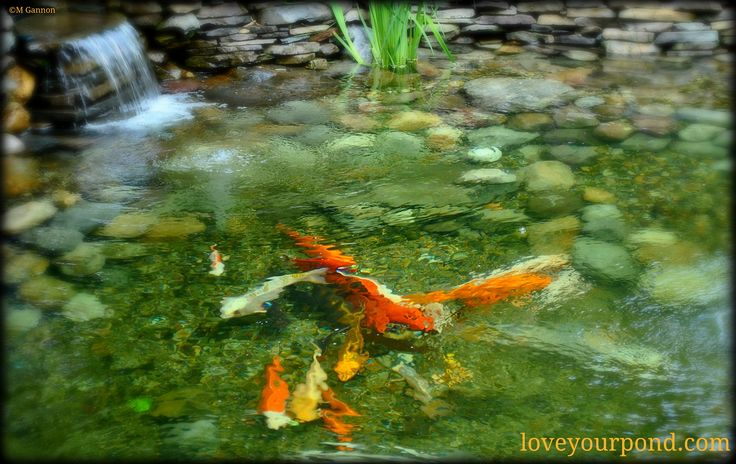 Beautiful koi pond with simple waterfall display designed for Easy fish pond