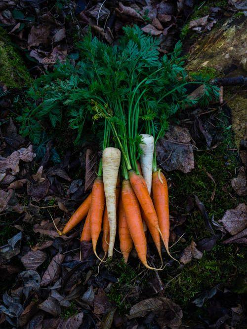Die Wurzelgemüse Quiche mit Ziegenkäse wird mit Karotten, Pastinaken und Petersilienwurzel belegt. Das Rezept passt gut als Beilage zum Rinderbraten.