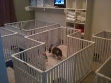 28 best dog crates images on Pinterest | Indoor, Plastic and 3/4 beds