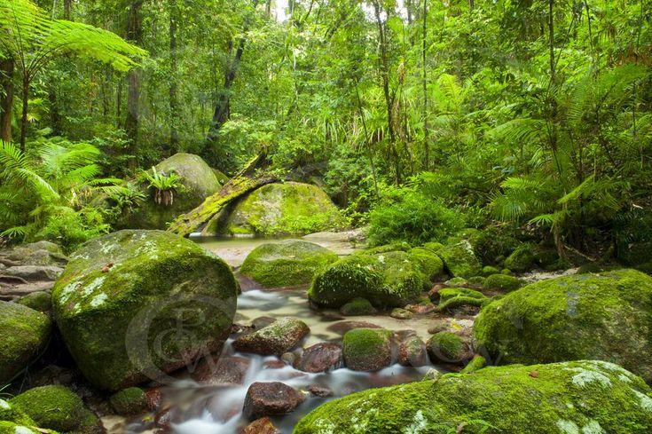 Daintree Rainforest by Owen Wilson Photography, Cairns Australia