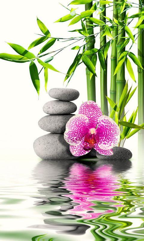 Pin by teresa ocegueda on wallpaper for your phone zen art zen meditation zen - Estores personalizados con fotos ...